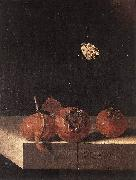 COORTE, Adriaen Three Medlars with a Butterfly zsdgf oil on canvas