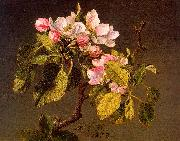 Martin Johnson Heade Apple Blossoms oil painting reproduction