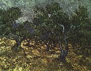 Vincent Van Gogh The Olive Grove oil painting