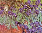 Vincent Van Gogh Irises oil painting