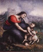 Cesare da Sesto Madonna and Child with the Lamb of God oil on canvas