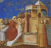 GIOTTO di Bondone Presentation of the Virgin in the Temple oil painting reproduction