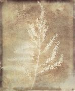 Willim Henry Fox Talbot Photogenetic Drawing oil on canvas
