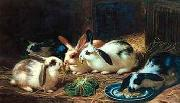 unknow artist Rabbits 116 china oil painting reproduction