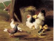 unknow artist Cocks 133 china oil painting reproduction