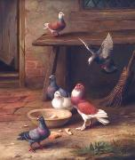 unknow artist Pigeons 064 china oil painting reproduction