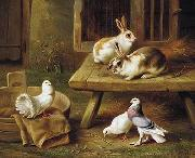unknow artist Two Rabbits and three pigeons 069 china oil painting reproduction
