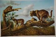 unknow artist Lions 030 china oil painting reproduction