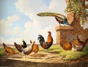 unknow artist Cocks 058 china oil painting reproduction