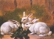 unknow artist Rabbit 072 china oil painting reproduction
