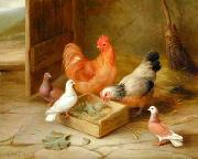 unknow artist poultry  141 china oil painting reproduction