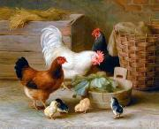 unknow artist Cocks 140 china oil painting reproduction
