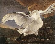 ASSELYN, Jan The Threatened Swan before 1652 oil on canvas
