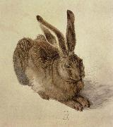Albrecht Durer hare china oil painting reproduction