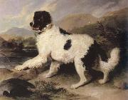 Sir Edwin Landseer lion a newfoundland dog china oil painting reproduction