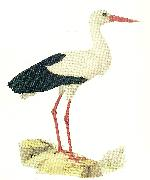 broderna von wrights vit stork china oil painting reproduction