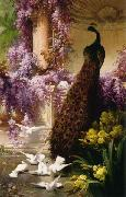 Eugene Bidau A Peacock and Doves in a Garden china oil painting reproduction