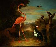 Jakob Bogdani Flamingo and Other Birds in a Landscape oil painting reproduction