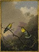 Martin Johnson Heade Copper-tailed Amazili china oil painting reproduction