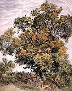 Thomas frederick collier Study of an Oak Tree oil