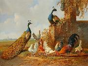 unknow artist Peacocks and chickens china oil painting reproduction