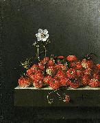 Adriaen Coorte Still life with wild strawberries. oil on canvas