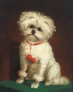 Anonymous Portrait of a Maltese dog oil painting reproduction