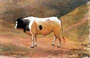 Benedito Calixto Ox grazing oil painting reproduction