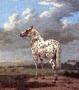 POTTER, Paulus The Piebald Horse oil painting reproduction