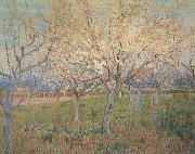 Vincent Van Gogh Orchard with Blossoming Apricot Trees (nn04)_ painting