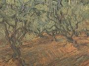 Vincent Van Gogh Olive Grove:Bright Blue Sky (nn04) painting