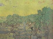 Vincent Van Gogh Olive Grove with Picking Figures (nn04) painting