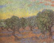 Vincent Van Gogh Olive Grove:Orange Sky (nn04) painting