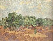 Vincent Van Gogh Olive Grove:Pale Blue Sky (nn04) painting