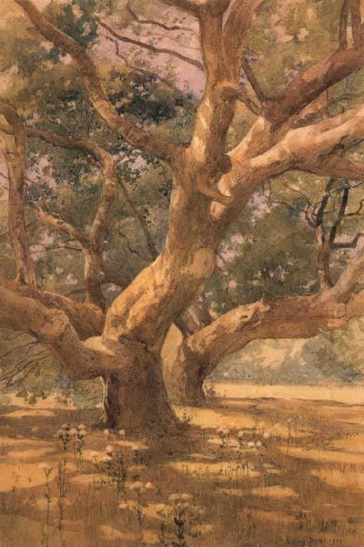 Oaks and Shadows, unknow artist