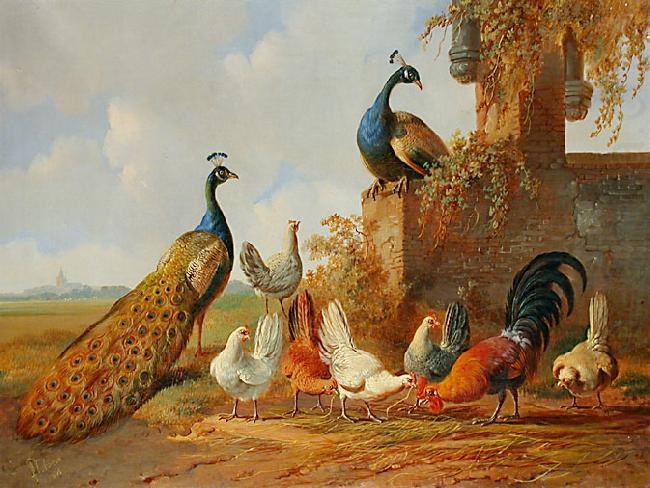 Albertus Verhoesen: Peacocks and chickens, unknow artist