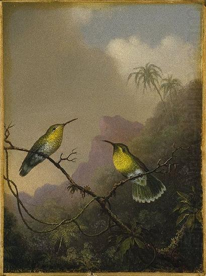 Copper-tailed Amazili, Martin Johnson Heade